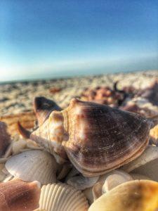 Shells on Marco Island